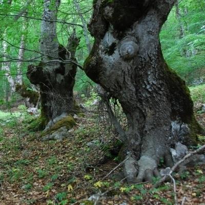 Baumgeister und Erzählbäume: Wandern im Nationalpark Abruzzen