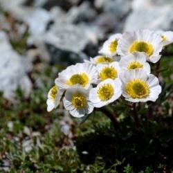 Wandern auf GTA: Eine botanische Alpenüberschreitung