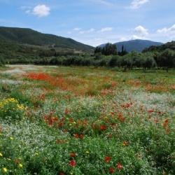 Botanische Wanderungen im Frühjahr: Wandern durch die blühende Hügellandschaft des Piemont
