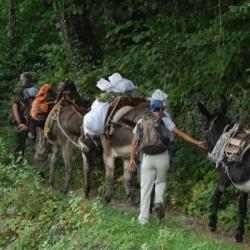 Mit Eseln und leichtem Gepäck von Hütte zu Hütte: Eseltrekking