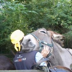 Mit Eseln und leichtem Gepäck von Hütte zu Hütte: Kein Esel-Drama!