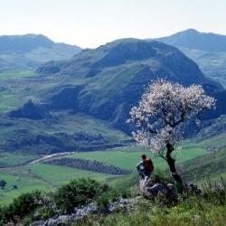 Wandern in Süditalien: Mandelblüte